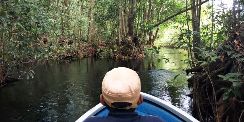 menyusuri jalur reptil di taman nasional sebangau kalimantan