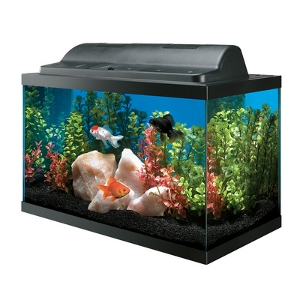 Feed and Pet Supply | 10 Gallon Basic Aquarium Kit   Rio Linda, CA