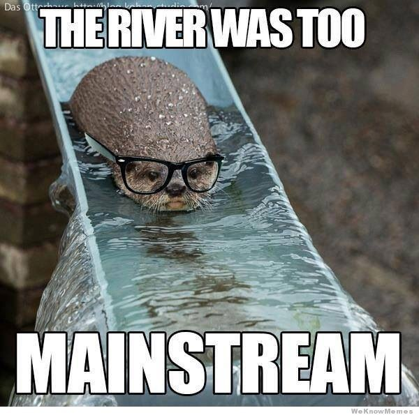 18 Otter Memes That Will Make You LOL   Azula   For the Love of Oceans 1  Hipster otter