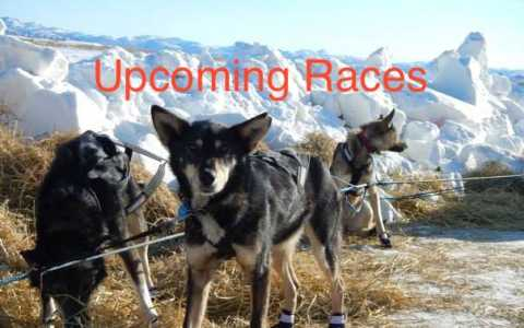 Upcoming Races