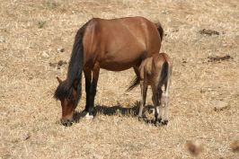 The_Skyros_pony