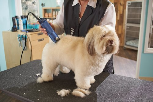 Medium Of Best Dog Clippers