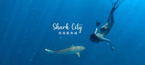 帛琉鯊魚城Shark City 與鯊魚共遊 不驚險卻夢幻的超現實體驗