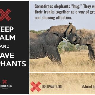 World Elephant Day: Save Elephants