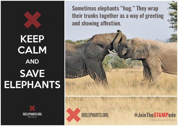 SaveElephants