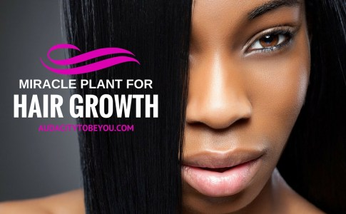 MIRACLE PLANT FOR HAIR GROWTH-2