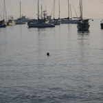 Apparently the seals get a big kick out of people watching - can you blame them?