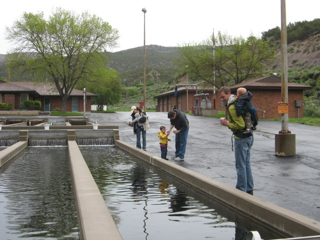 Everyone feeding the fish at the Jones Hole fish hatchery. The ranger seemed really excited to have people to talk to, which resulted in the boys all getting a ton of fish swag.