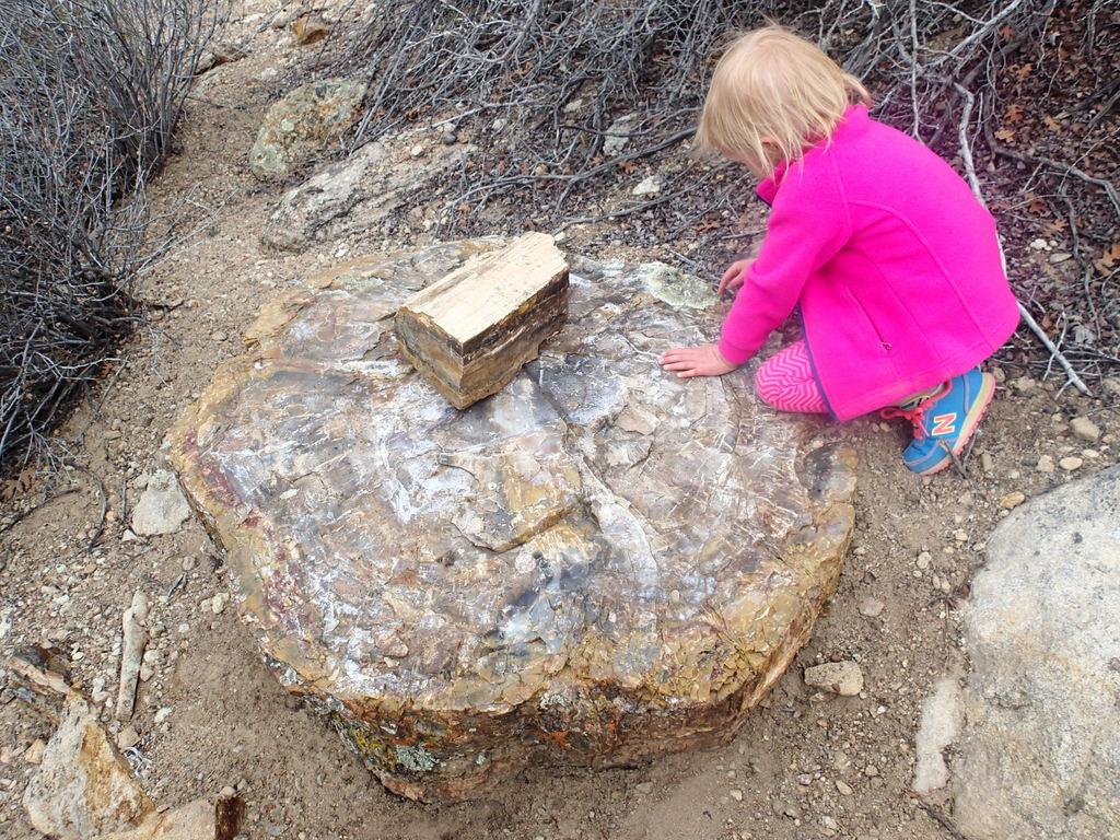 Ellen and a petrified stump.