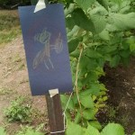 Cooper became convinced the squirrels were eating our raspberry plants so he made this no squirrels allowed sign.