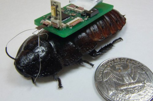 cockroach-cyborg