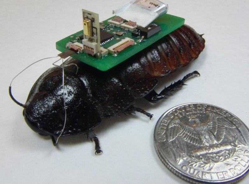Cyborg z karalucha