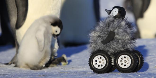 penguin-drone-ft