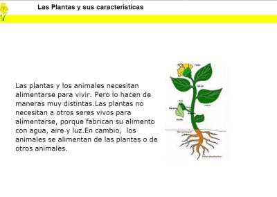 Las Plantas y sus características