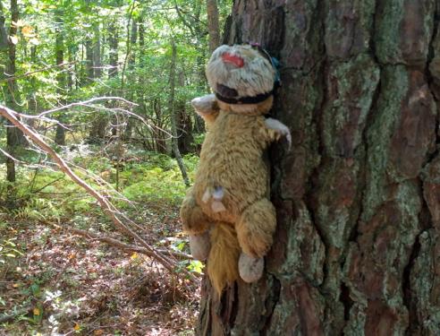 trailhead mascot
