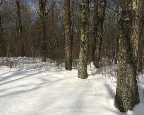 unbroken blue trail