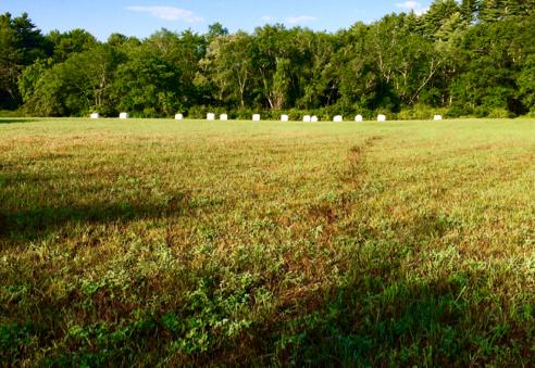hay rolls on place farm