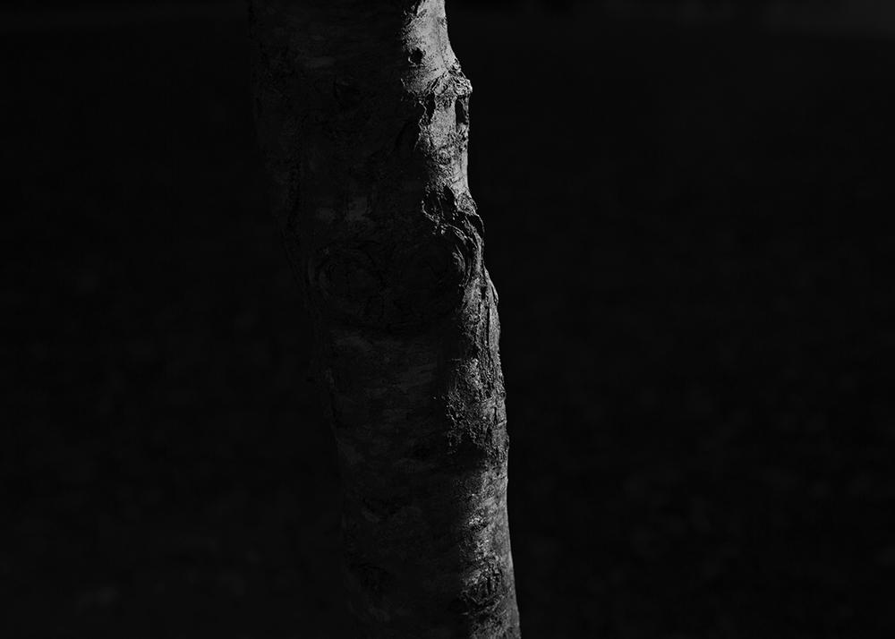Aurelie-Sorriaux-Photographer-Howling#7