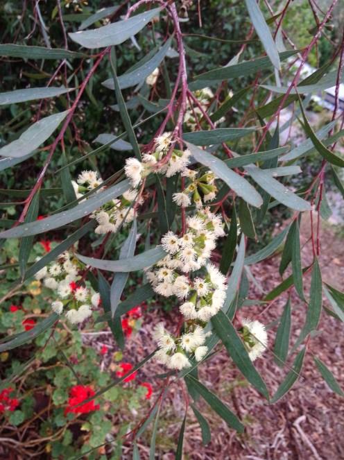 Oppo-N1-Flowers