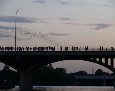 https://en.wikipedia.org/wiki/Ann_W._Richards_Congress_Avenue_Bridge#/media/File:Austin_-_bats_watching_3.jpg