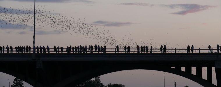 https://en.wikipedia.org/wiki/Ann_W._Richards_Congress_Avenue_Bridge#/media/File:Austin_-_bats_watching_3.jpg