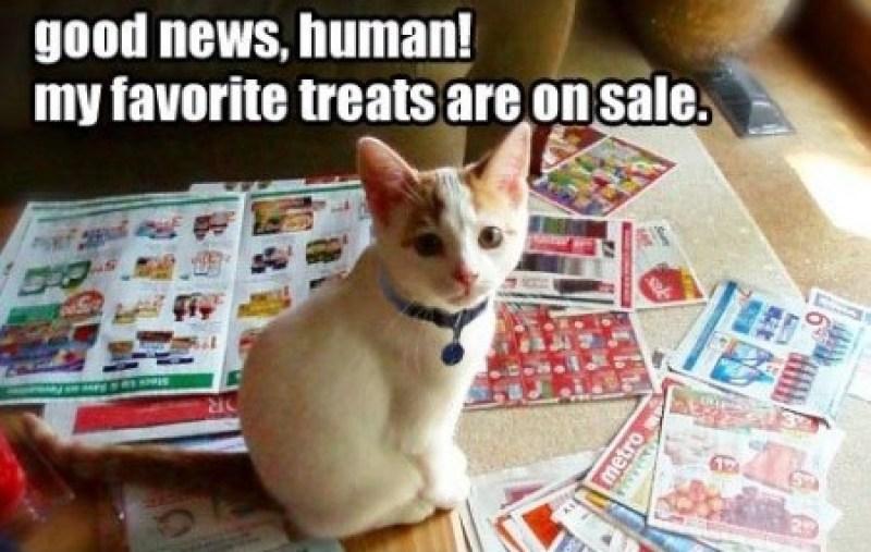 Hobbs-smart-shopper-cat-450x318