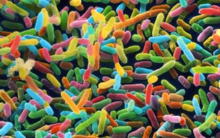 Microbiota humana - Escherichia coli