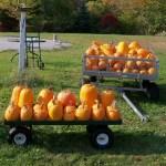 Autumn Harvest Orchard