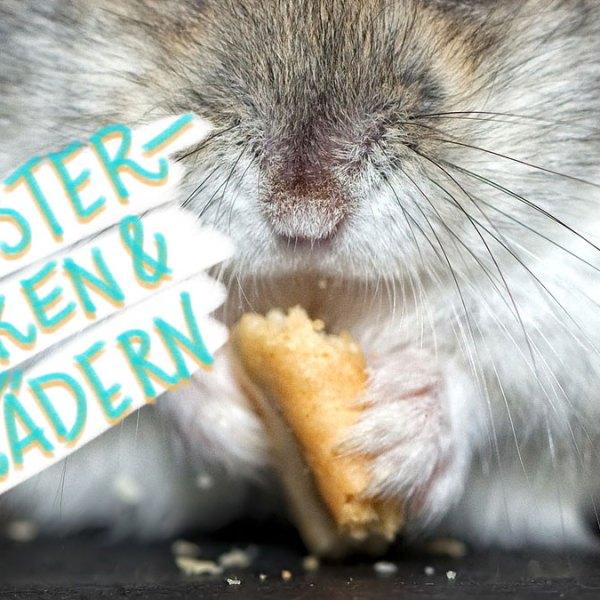 Was sucht ein Hamster bei Germany's Next Topmodel? Mehr, als Sie denken.