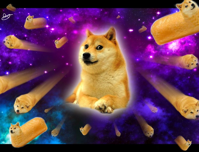 Hd Doge Wallpaper For Free Full Wallpapers Of