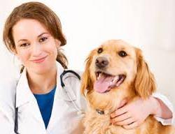 veterinarios del siglo XXI