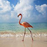Flamingo-Beach