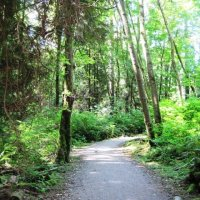 Pacific Spirit Regional Park in Vancouver: Laid Back Cycling in a Cool Green Forest - An Average Joe Cyclist Guide