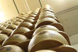 Parmigiano Reggiano Factory Tour