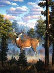 Morning Light Wildlife Gallery Birthday Card