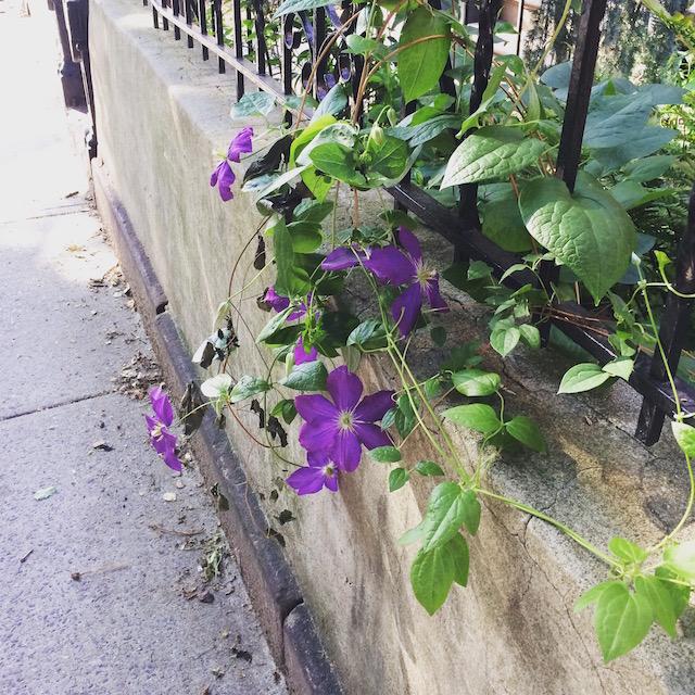 Flowers by a Brooklyn Brownstone.