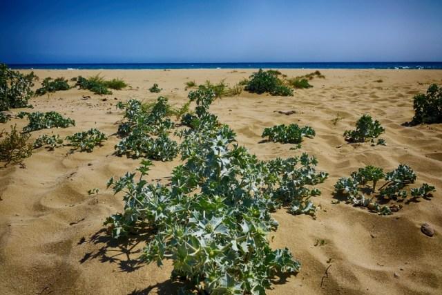 Пляжи Кипра отзывы