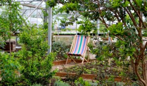Take time to relax and enjoy the scent from the herbs and aromatic plants in the greenhouse