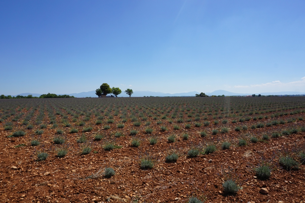 Lavendel und Flamingo-Schwärme? Willkommen in der Provence!