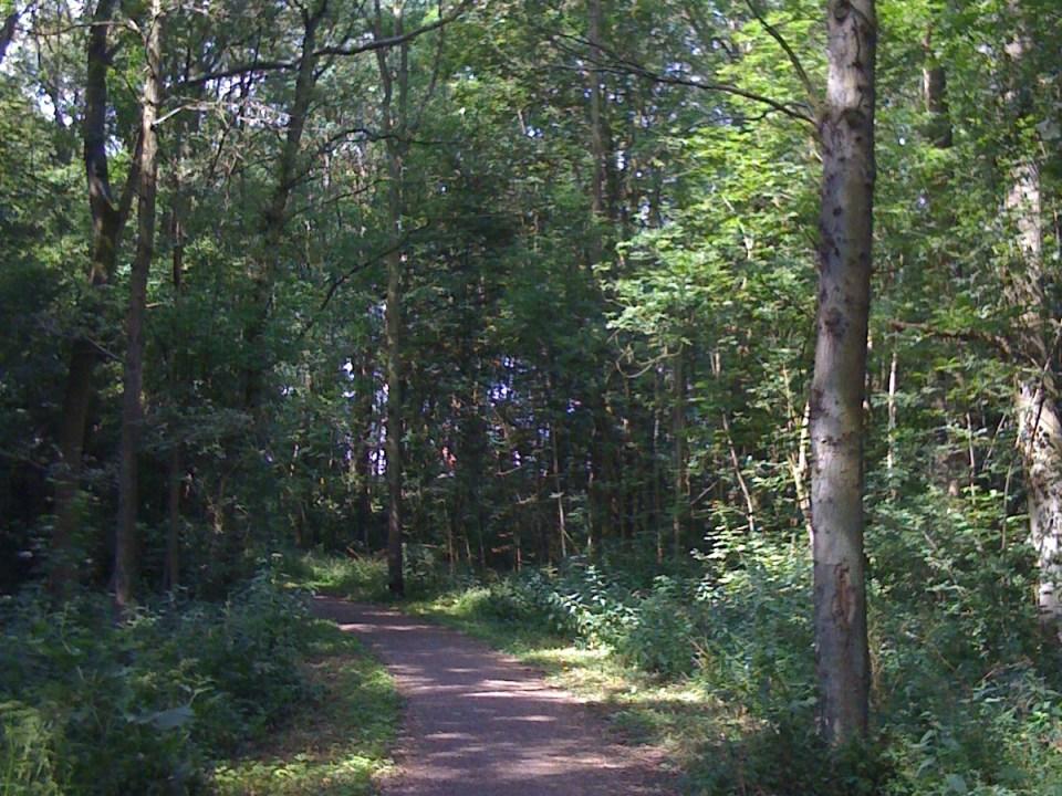 bos trail