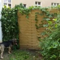 My DIY Green Privacy Screen
