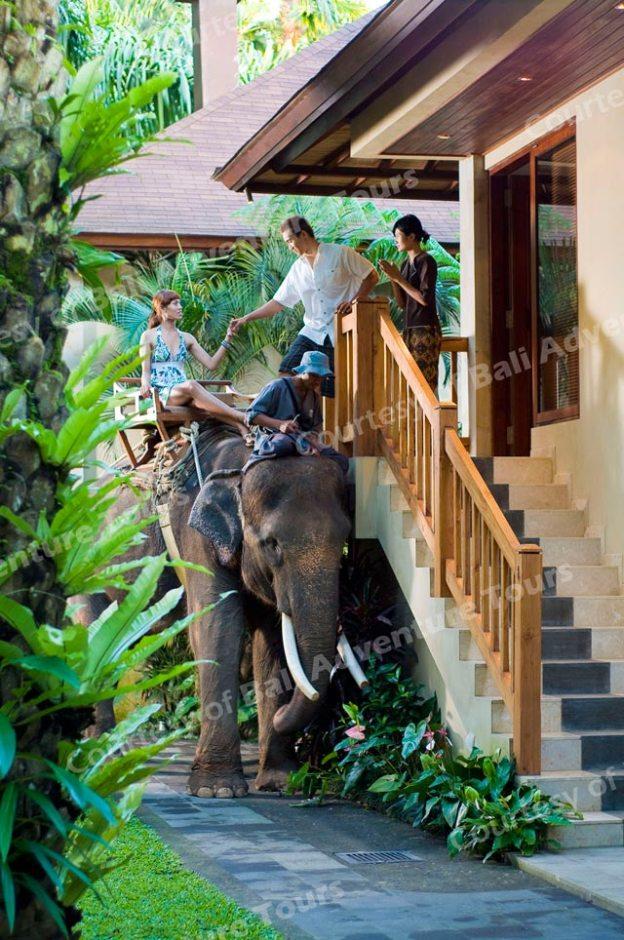 巴里島大象保育公園飯店-大象計程車