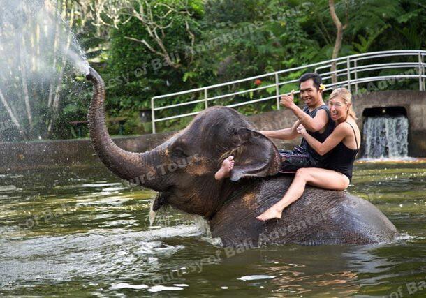 亞洲唯一【好萊塢明星也到訪】大象保育公園飯店-獨家住一晚