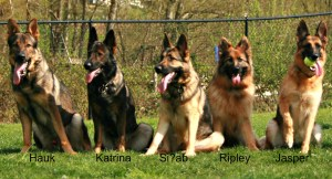 5 GSDs in a row