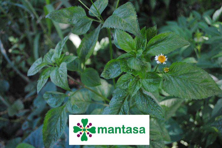 Mantasa - Ayorek Networks