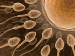 male infertility problem