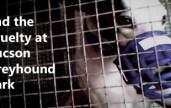 Grayhound Cruelty