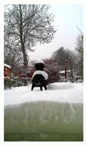 Snowy garden by @jojomololo