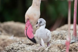 drained flamingo