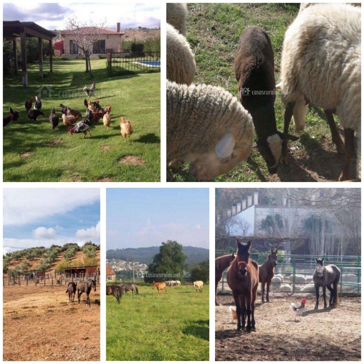 5 casas rurales donde los niños tendrán contacto directo con los animales